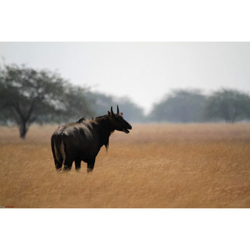 Ahmedabad : Wild Life Sanctuary at Dasada
