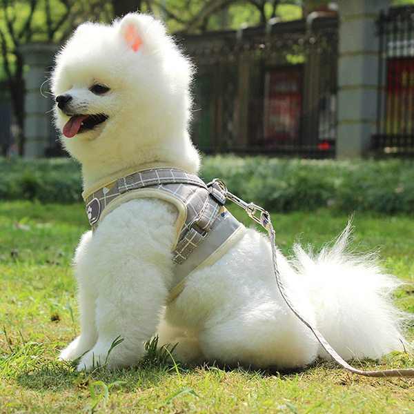 Trends Cat & Dog Escape Proof Universal Harness with Leash SetImage